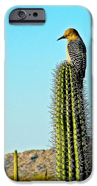 Gila Woodpecker On Saguaro In Organ Pipe Cactus National Monument-arizona IPhone 6s Case by Ruth Hager