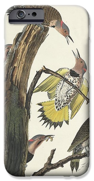 Gold-winged Woodpecker IPhone 6s Case by John James Audubon