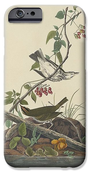 Golden-crowned Thrush IPhone 6s Case by John James Audubon