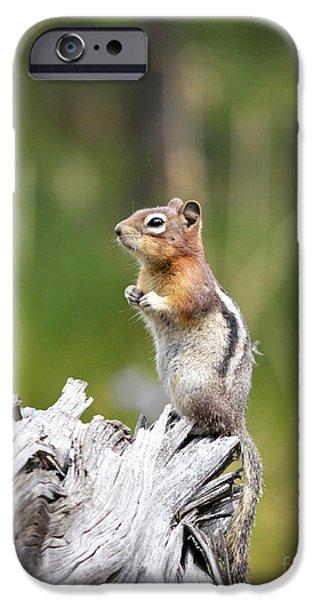 Golden Mantled Ground Squirrel IPhone Case by Brad Christensen