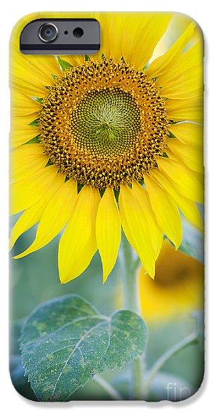 Golden Sunflower IPhone Case by Tim Gainey