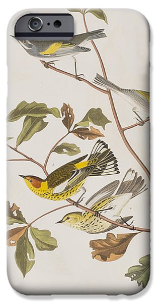 Golden Winged Warbler Or Cape May Warbler IPhone Case by John James Audubon