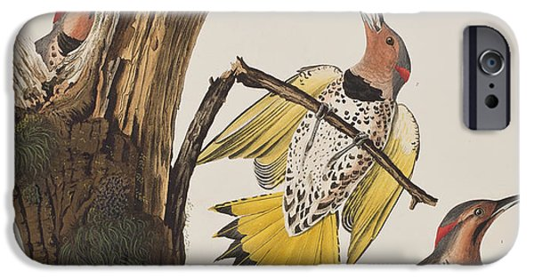 Golden-winged Woodpecker IPhone Case by John James Audubon