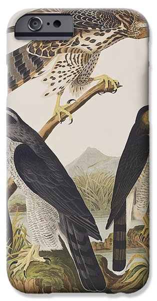 Goshawk And Stanley Hawk IPhone 6s Case by John James Audubon