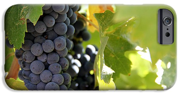 Grapes IPhone 6s Case by Nancy Ingersoll