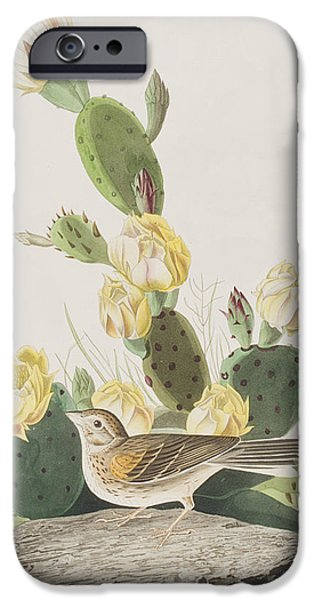 Grass Finch Or Bay Winged Bunting IPhone Case by John James Audubon