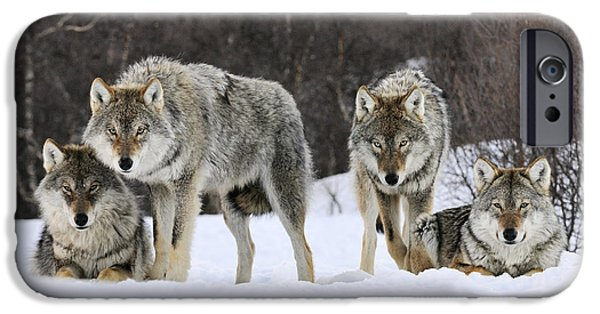 Gray Wolves Norway IPhone 6s Case by Jasper Doest