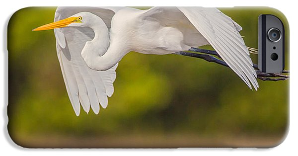 Great Egret Folded Wings IPhone Case by Andres Leon