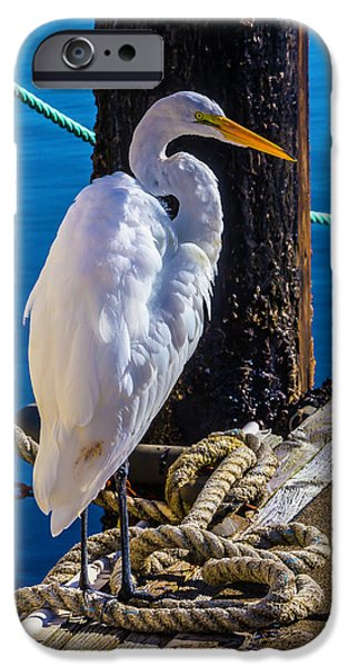 Great White Heron On Boat Dock IPhone 6s Case by Garry Gay