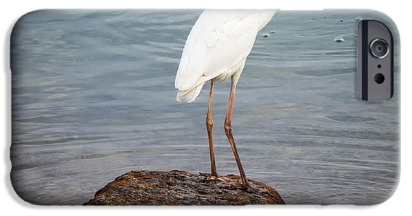 Great White Heron With Fish IPhone Case by Elena Elisseeva