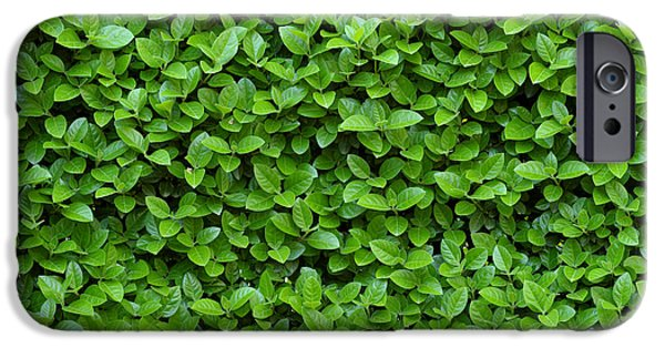 Green Hedge IPhone Case by Frank Tschakert