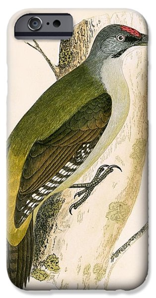 Grey Woodpecker IPhone Case by English School
