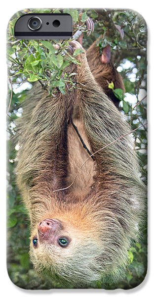 Hangin In Costa Rica IPhone Case by Betsy C Knapp
