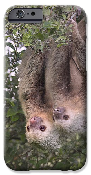 Hanging Out IPhone Case by Betsy C Knapp