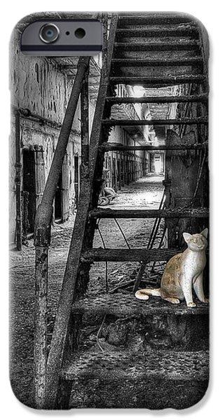 Here Kitty Kitty Kitty... IPhone Case by Evelina Kremsdorf