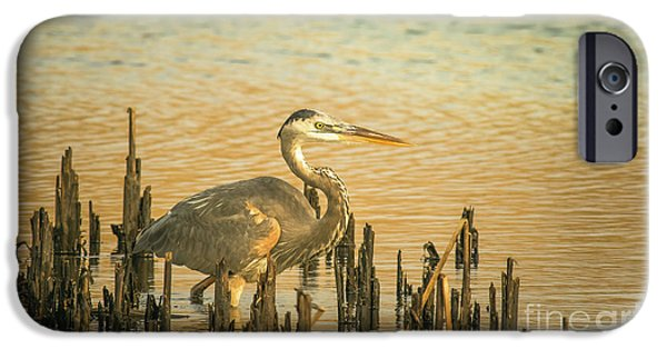 Heron Wading IPhone Case by Robert Frederick