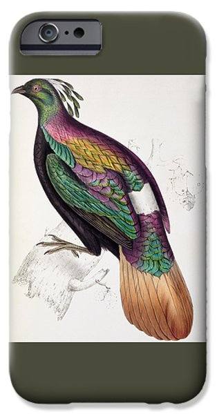 Himalayan Monal Pheasant IPhone 6s Case by John Gould