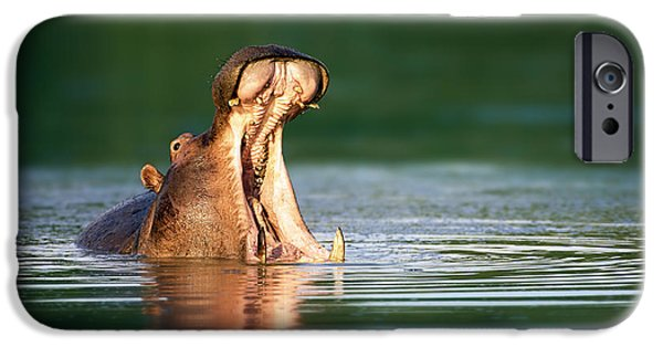 Hippopotamus IPhone 6s Case by Johan Swanepoel