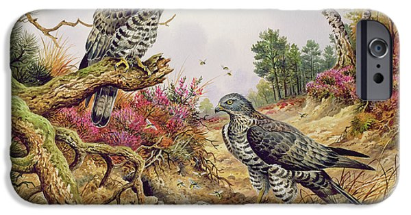 Honey Buzzards IPhone 6s Case by Carl Donner