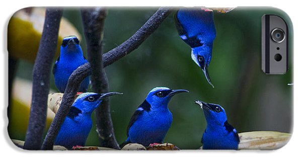 Honeycreeper IPhone 6s Case by Betsy Knapp
