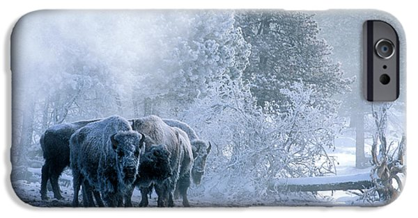 Huddled For Warmth IPhone Case by Sandra Bronstein