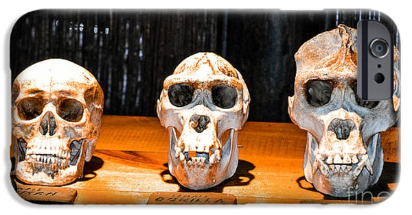Human Female Male Gorilla Skulls IPhone Case by Gary Keesler