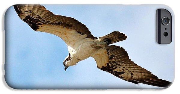 Hunter Osprey IPhone 6s Case by Carol Groenen