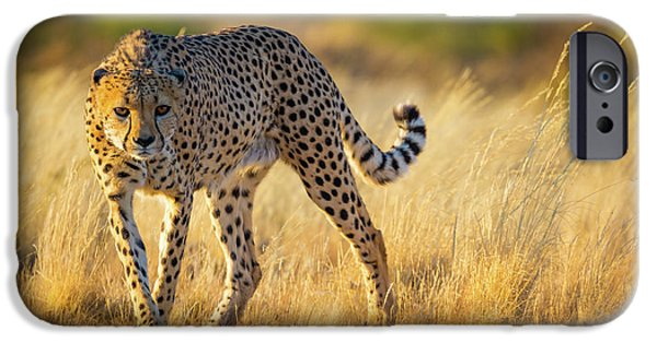 Hunting Cheetah IPhone 6s Case by Inge Johnsson