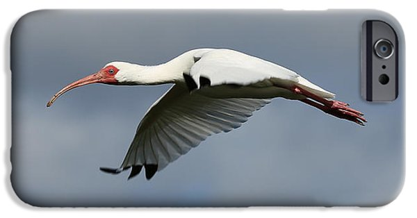 Ibis In Flight IPhone 6s Case by Carol Groenen