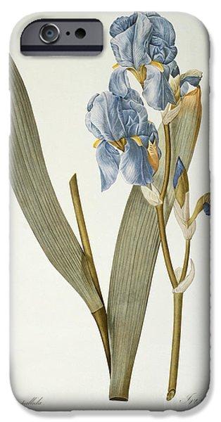 Iris Pallida IPhone Case by Pierre Joseph Redoute