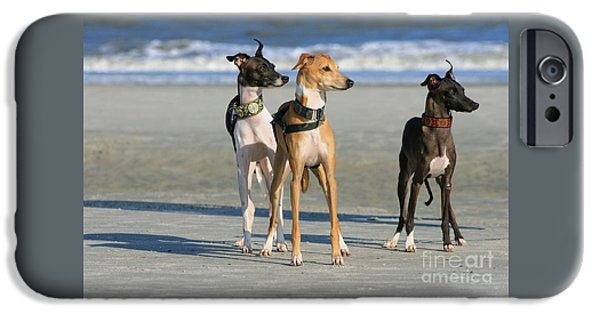 Italian Greyhounds On The Beach IPhone Case by Angela Rath