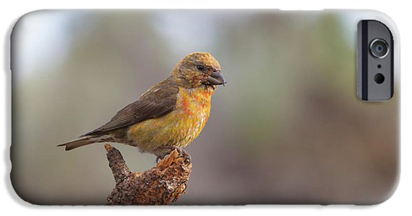 Juvenile Male Red Crossbill IPhone Case by Doug Lloyd
