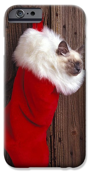 Kitten In Stocking IPhone Case by Garry Gay