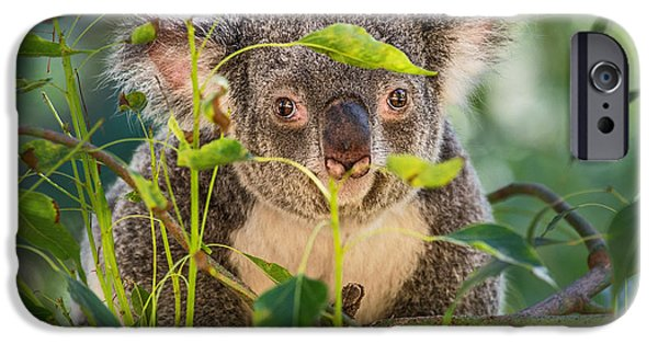 Koala Leaves IPhone 6s Case by Jamie Pham