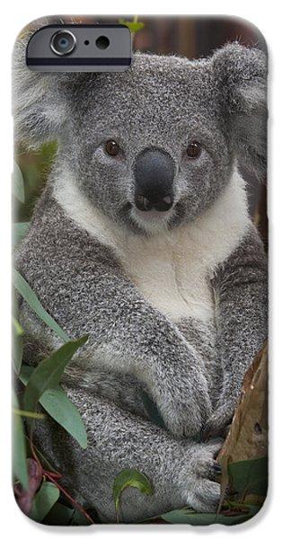 Koala Phascolarctos Cinereus IPhone 6s Case by Zssd