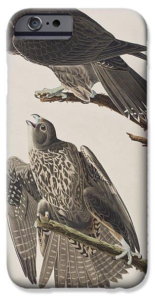 Labrador Falcon IPhone 6s Case by John James Audubon