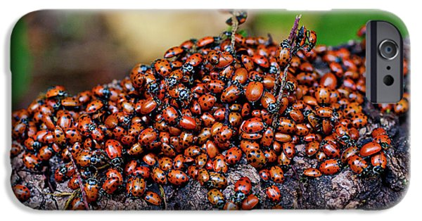 Ladybugs On Branch IPhone 6s Case by Garry Gay