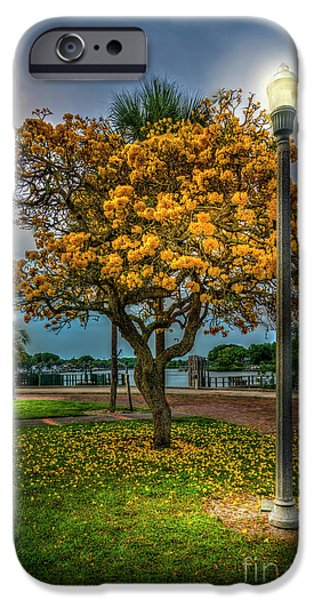 Lamp And Tree IPhone Case by Marvin Spates