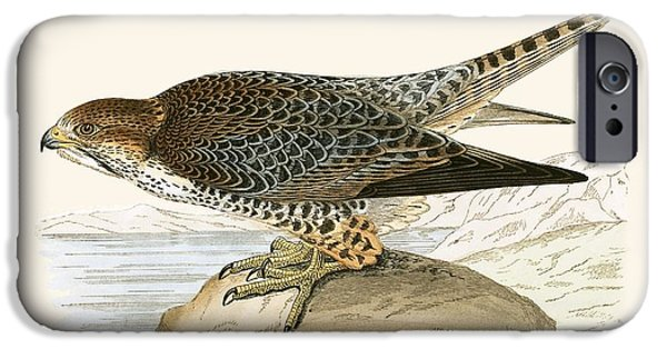 Lanner Falcon IPhone 6s Case by English School