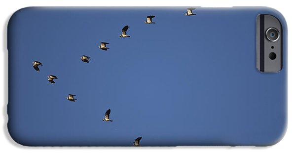 Lapwing Flock IPhone 6s Case by Per-Olov Eriksson