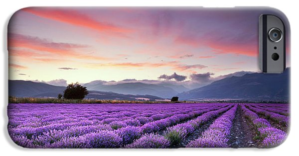 Lavender Season IPhone Case by Evgeni Dinev
