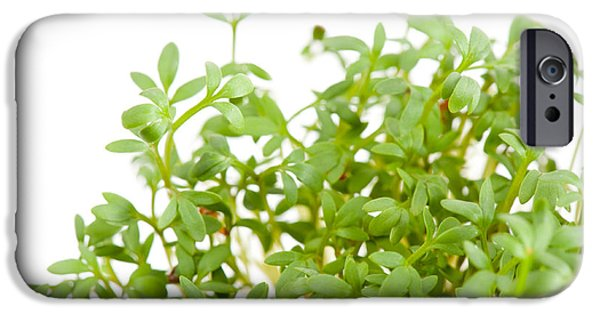 Lepidium Sativum Or Cress Sprouts Grow On White  IPhone Case by Arletta Cwalina