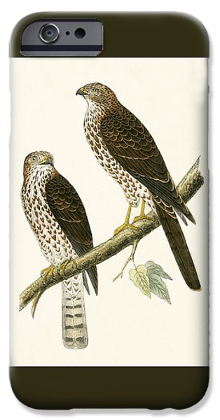 Levant Sparrow Hawk IPhone 6s Case by English School