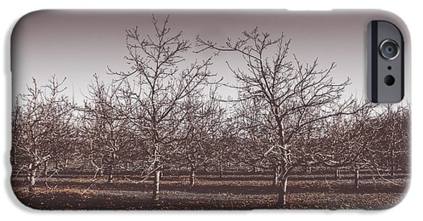 Lifeless Cold Winter Orchard Trees IPhone Case by Jorgo Photography - Wall Art Gallery