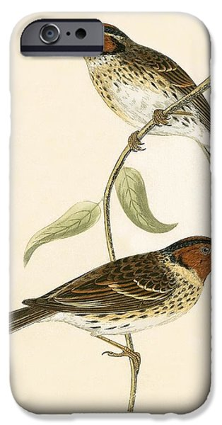Little Bunting IPhone 6s Case by English School