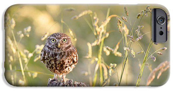 Little Owl Big World IPhone Case by Roeselien Raimond