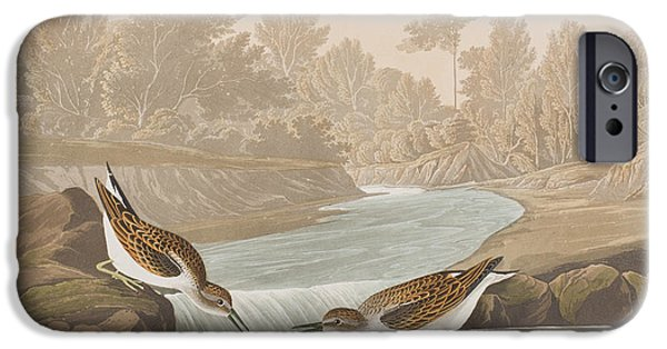 Little Sandpiper IPhone 6s Case by John James Audubon