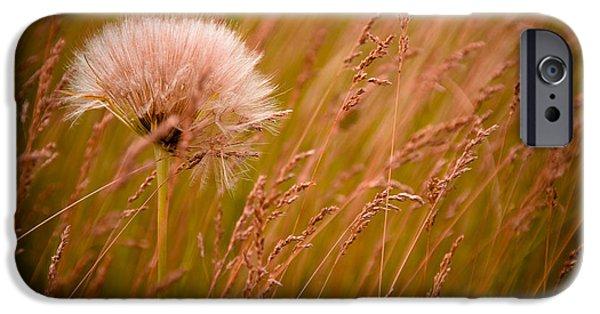 Lone Dandelion IPhone Case by Bob Mintie