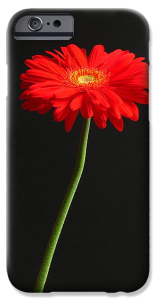 Long Stem Beauty IPhone Case by Juergen Roth