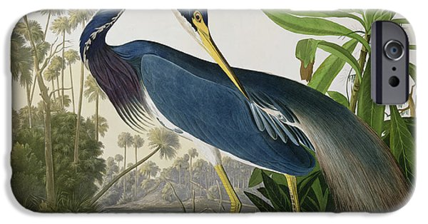 Louisiana Heron IPhone Case by John James Audubon